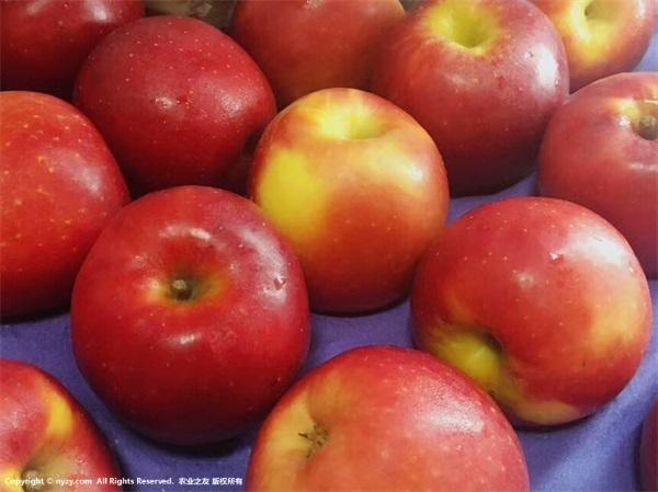 生態循環推進蘋果產業轉型升級